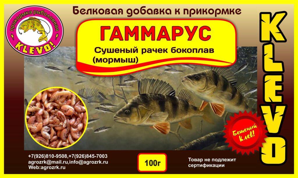 gamarus-1024x614 Гаммарус (рачок бокоплав)