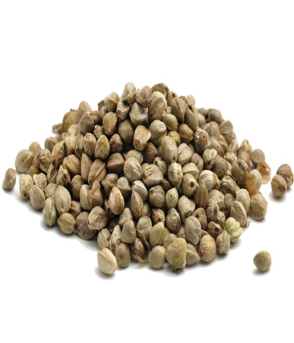 semena-konopli-1 Семена конопли