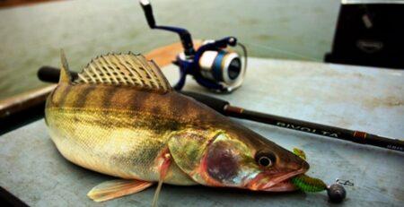 топ ловли рыбы