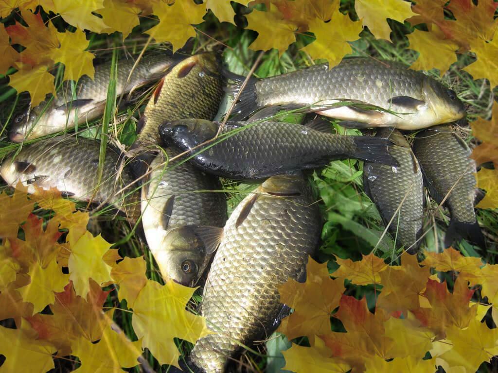 опарыш активатор клева рыбы