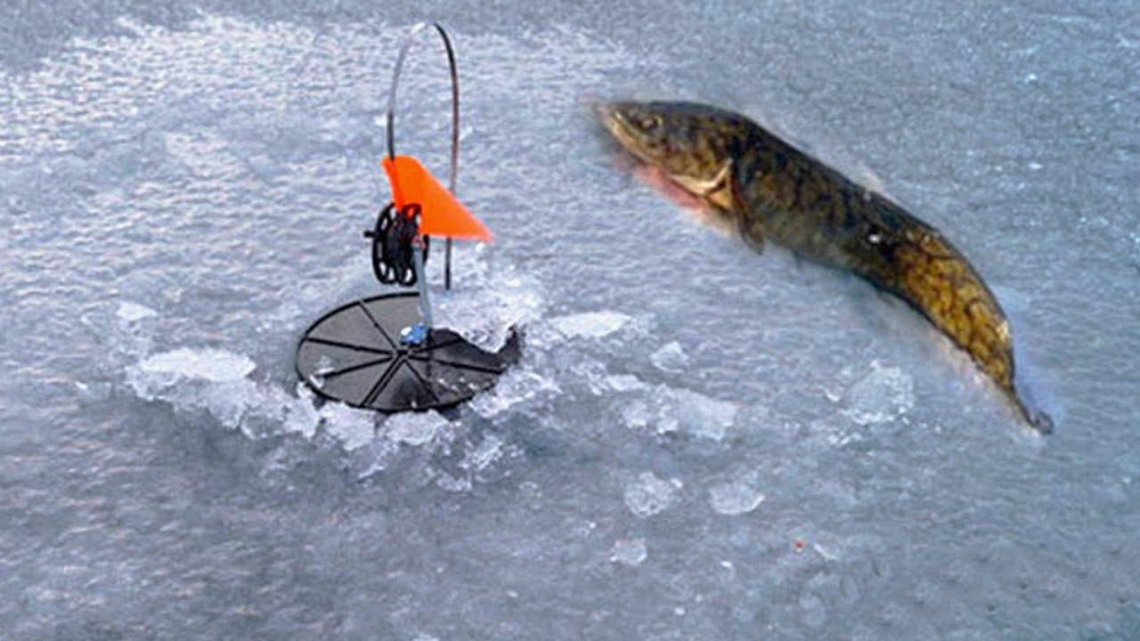 устройство для ловли хищника на льду картинки нужен