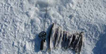 Ловля корюшки зимой